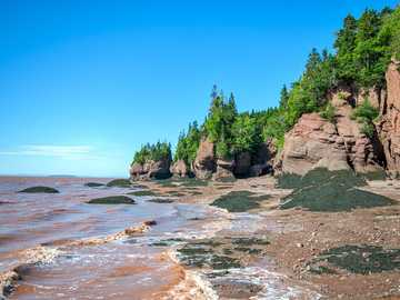 Chocolate waters of Fundy Bay - green trees on brown rock formation near body of water during daytime. Hopewell, NB, Canada