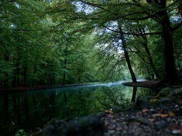 corpo de água calmo entre as árvores - Um pequeno lago na floresta em uma bela manhã de outono.