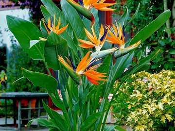 Екзотично цвете - М .....................