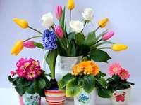 Virágcserepek különböző virágokkal
