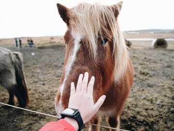 persona che sta per toccare un cavallo - Scattata durante il nostro tour in Islanda. Ci siamo fermati in questo posto dove puoi vedere i cava