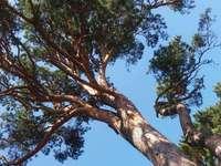 branches supérieures d'un arbre