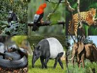 Wild Animals Puzzle - Wild animals are those that live in freedom, either on the land surface, in the water or flying.