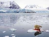 Tueur polaire - vivre parmi les glaciers n'est pas facile