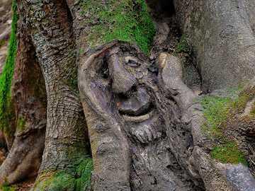 Uma criatura arbórea na floresta - Uma criatura arbórea na floresta