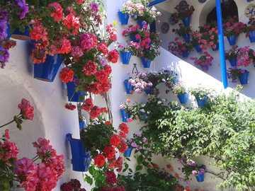 Cordoba Patio Festival Spanien - Cordoba Patio Festival Spanien