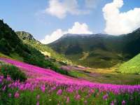 Mountains, meadow in flowers - M ....................