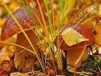 Krásné podzimní houby v lese - Krásné podzimní houby v lese