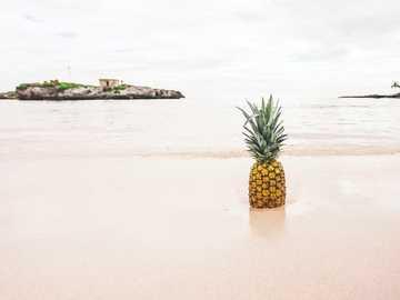 Ananas an der Küste Fotografie - Eine Ananas kann keine Banane werden. Also, sei einfach die beste Ananas, die du sein kannst. Grand