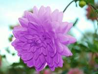 Vacker blomma - Pussel för barn - Vacker blomma