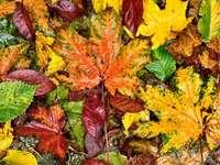 en aceasta imagina copii vor descoperi toamna - cu ajutorul puzzlelor vor descoperi culorile si frumusetea anotimpului toamna