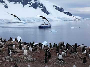 Penguins in Antarctica - M ......................