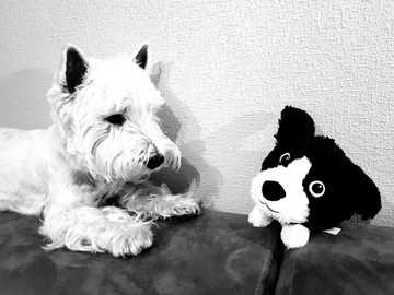 Luk vs kutya Piotr - A Doge bolyhos krém nekem piros színű