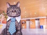 Katze in einer Krawatte - elegante Katze in einer Krawatte