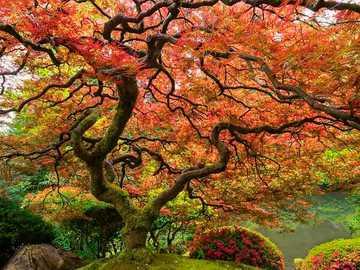 Árvore com uma grande copa de folhas - Árvore com uma grande copa de folhas