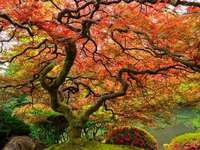 Δέντρο με μεγάλο θόλο φύλλων - Δέντρο με μεγάλο θόλο φύλλων