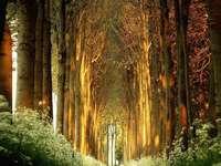Δέντρο δρομάκι γεμάτο φως - Δέντρο δρομάκι γεμάτο φως