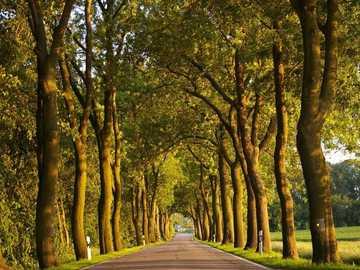 Todas as árvores em uma rua - Todas as árvores em uma rua