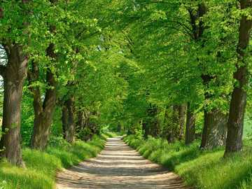 Beco das árvores no campo - Beco das árvores no campo