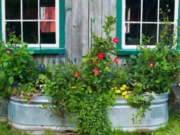 Banheira de zinco com plantas na frente da casa - Banheira de zinco com plantas na frente da casa