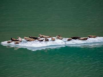 animales en iceberg - Focas compartiendo bote salvavidas.