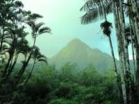 Jardin de Balata - green palm trees near mountain during daytime. Martinique