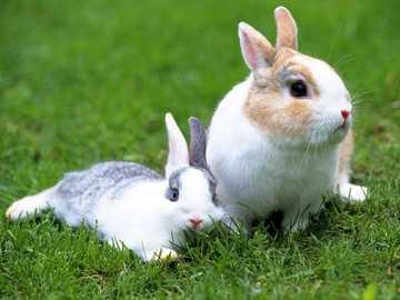 Spelen met het konijn - De natuur en haar fauna zijn erg belangrijk
