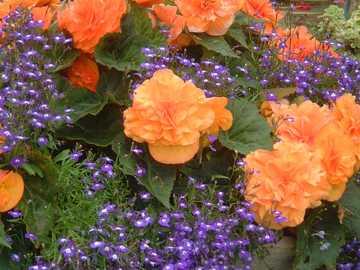 Blumen in der Schubkarre - Blumen in der Schubkarre, Gartenanzeige