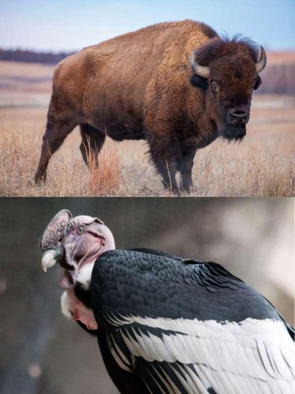 Nationale dieren - Probeer de nationale dieren op de foto te raden / Trata de adivinar los animales nacionales de la imagen (3×5)
