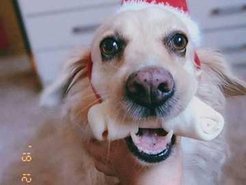 Psí veselé Vánoce - Nina na osmé Vánoce