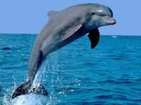 Dolphin over the water - M ........................