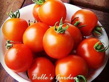 świeży pomidor - Świeże pomidory zawierają dużo witamin, sałatki można przygotować i marynować