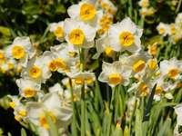 moje śliczne kwiaty