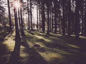 árvores da floresta - Sol brilhando por entre as árvores na floresta. Devon, Reino Unido