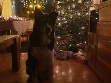 Vánoce - Vánoce doma