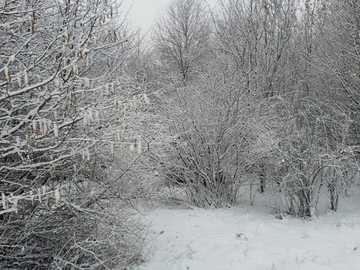 Zima v lese poblíž Kolína nad Rýnem - Zimní krajina v lese