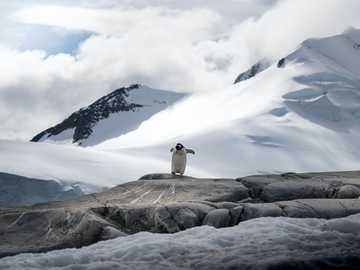 бяло и кафяво късо покрито куче върху сива скална формация през деня - Пингвин изследва с планински фон в Порт Локрой, Антарк�