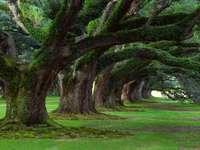 φύση - όμορφη θέα στα παλιά δέντρα
