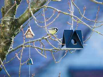 бяла и черна птица върху кафява дървена къща за птици - Големият синигер инспектира храна в 3D принтер за птици