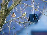 pássaro branco e preto na casinha de madeira marrom - Chapim-real inspecionando comida em um alimentador de pássaros impresso em 3D.