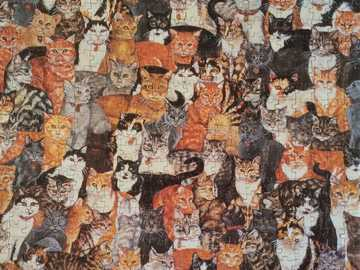 Lovely Cats - This Is A Photo Of Cats