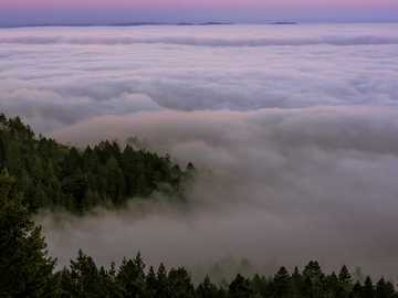 Low fog covering Mount Tamalpais - green trees covered with fogs under blue sky during daytime. Mount Tamalpais State Park, Mill Valley