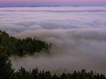 Bassa nebbia che copre il Monte Tamalpais - alberi verdi coperti di nebbie sotto il cielo blu durante il giorno. Mount Tamalpais State Park, Mil