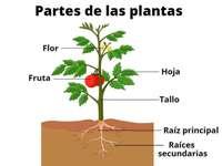 Delen van de planten - Je moet de stukjes met de muis slepen om de afbeelding van de plant te zien