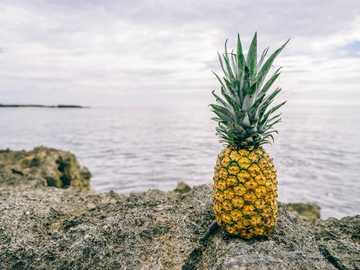Ananas auf den Felsen - Foto von Ananas auf Felsen. Grand Sirenis Riviera Maya Resort, Akumal, Mexiko