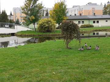 Parque com lagoa - M .......................
