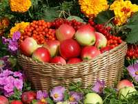 Mele nel cestino e fiori