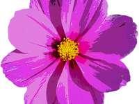 piękny fioletowy kwiat - To bardzo piękny purpurowy kwiat. Uwielbiam to !! ???