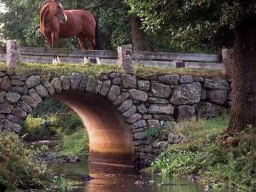Cavalo na ponte. - Quebra-cabeça. Enigma. Animais.