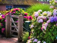 Hortênsias no jardim - Hortênsias coloridas no jardim